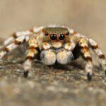 spider google